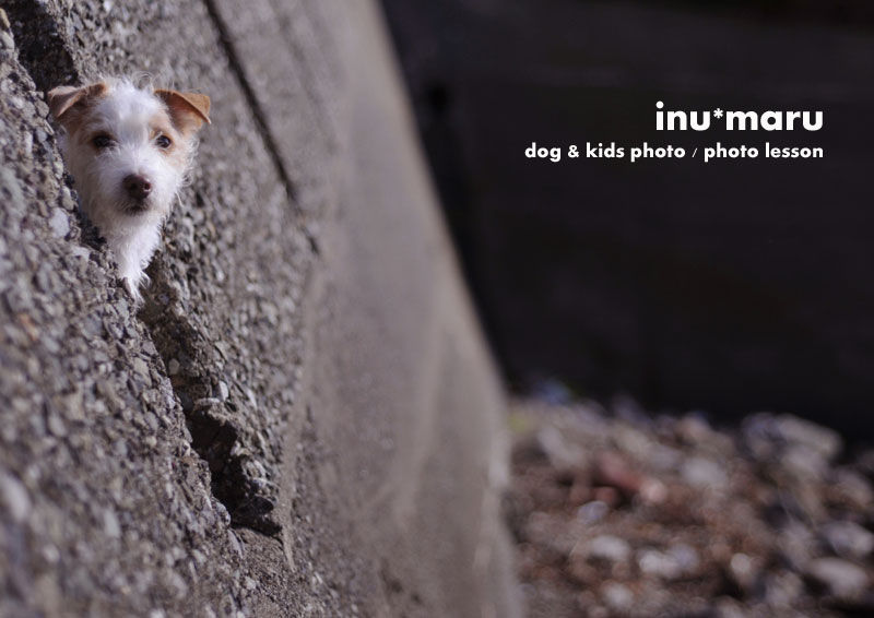 welcome to inu*photo! click to enter.